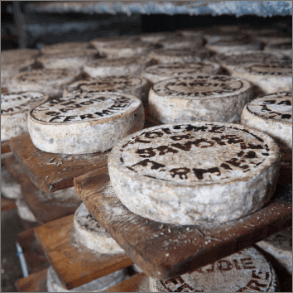 Visit to a cheese producer